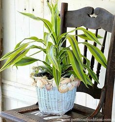 Revamp Baskets with Paint and Shells! http://www.completely-coastal.com/2015/07/revamp-basket-paint-shells.html