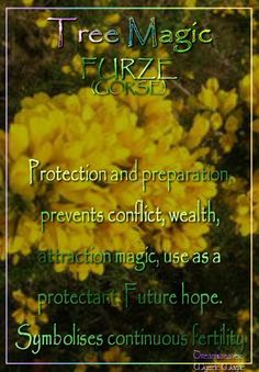 FURZE (GORSE) Protection and preparation, prevents conflict, wealth, attraction magic, use as a protectant.  Future hope. Symbolises continuous fertility