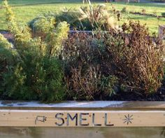 Invite children to smell the herbs in the garden- maybe the older children could make some signs that say:  smell, touch, listen, taste and place them in appropriate spots in the garden and OC