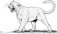 puma and cougar coloring pages 01