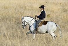 Portugal - Alentejo, Ervideira's Lusitano Horses