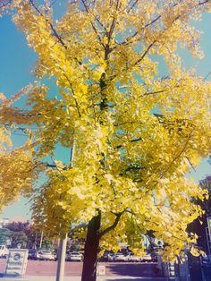 노란 은행잎이 가득하다.