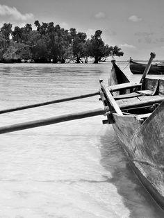 Dans la mangrove · Des Goûts et des COULEURS