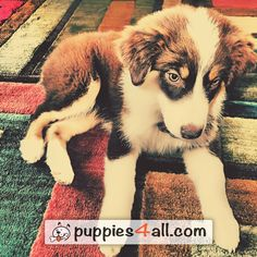 Check for your lovely buddy! Click the image Your Best Friend, Best Friends, Cute Puppies, Dogs And Puppies, Loyal Friends, Husky, Corgi, Pets, Check