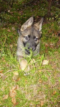 Foto - Google Foto Fox, Photo And Video, Google, Animals, Animales, Animaux, Animal, Animais, Foxes