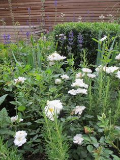 Simple planting schemes that are easy to maintain and provide months of interest and flowers.