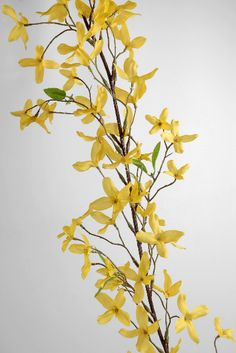 8.00 SALE PRICE! With its peppy blossoms and bright hue, this branch will bring the warmth of a European summer to your home. The Silk Forsythia Garland feat...
