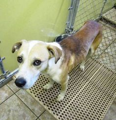 North Georgia - Commerce - Last Day is 2/19 - Please share for adopter - foster - rescuer - Consider pledging for rescue.