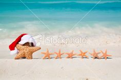 Starfish Family Christmas
