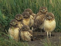 Owl Family Wallpaper from Animal-Lovers. This owl family looks so great together :D They look so cute Hope you like this image too! Tier Wallpaper, Owl Wallpaper, Wallpaper Gallery, Funny Animal Pictures, Funny Animals, Cute Animals, Owl Pictures, Animal Pics, Wild Animals