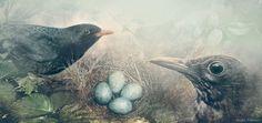 Cuaderno de Gaia 10º Nidos de aves urbanas