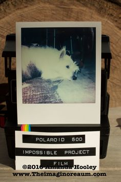 Waffle the Shop Westie Models for Polaroid Test Shot with: Polaroid Sun AF 660 5/6/2015 Impossible Project Film For Camera sold in my shop: www.theimaginoreaum.com Impossible Project, Instant Camera, Polaroids, Westies, Waffle, Cameras, I Shop, Etsy Shop, Sun