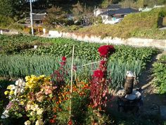 Autumn in Gangneung  City