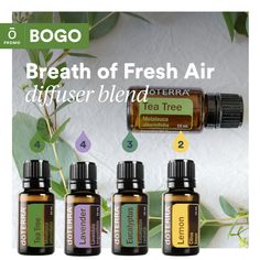 Need a breath of fresh air?  Try this diffuser blend. Did it help?  Buy Tea Tree 15 mL, get Citronella 15 mL Free! Essential Oils For Breathing, Essential Oils 101, Essential Oils Cleaning, Essential Oil Diffuser Blends, Eos Products, Doterra Oils, Doterra Blends, Doterra Diffuser, Perfume