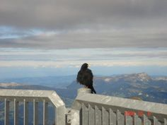 Winged Guardians of Mountainscapes - Indian Wildlife Club Ezine - March, 2014