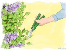 ringiovanire un lillà ricoperto di vegetazione -Se è vecchio, coperto di vegetazione, o senza forma, fai una potatura di ringiovanimento.. Questo tipo di potatura va oltre una potatura annua più leggera e prevede un taglio più deciso del cespuglio o dell'albero, consentendo un nuovo sviluppo del lillà. Fai la tua valutazione all'inizio della primavera, prima che il lillà ritorni alla vita.