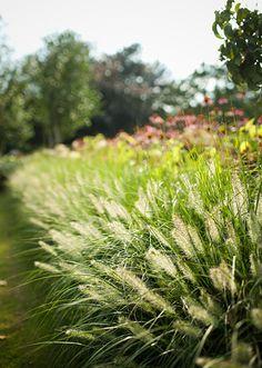 www.buytengewoon.nl landelijke-tuinen landelijke-tuin-met-klassieke-buitenruimte-in-elspeet.html Texas Plants, Grass, Garden, Ornamental Grasses, Landscape, Plants, Herbs
