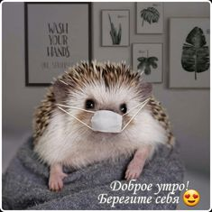 Funny Animals, Cute Animals, Good Morning Cards, Super Cute Puppies, Lord Shiva Painting, Cute Hedgehog, Cute Animal Photos, Clever Quotes, Animal Wallpaper