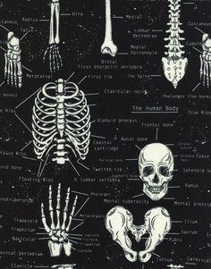 Anatomy of the Human Body Fabric