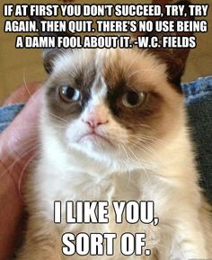Hell No Kitty .For more humor pics and grumpy kitty visit Grumpy Kitty, Grumpy Baby, Grump Cat, Funny Memes, Funny Quotes, Hilarious Jokes, Funniest Quotes, Funny Stuff, Hilarious Pictures