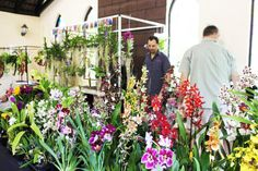 his year Our Orchid and Exotic Plant Fair 2019 will be held at Stephward Estate Uvongo Margate, South Coast, South Africa on Friday 8 November 8.30am till 4.30pm Saturday 9 November 8.30am till 4.30pm  Entrance is R15 for visitors, children under 10years free. Tea/Coffees, Lunches ,Drinks and Cash Bar services will be available in the Tea Garden or Pooldeck. Rare Plants, Exotic Plants, November 8, Lunches, South Africa, Orchids, Entrance, Wedding Venues, Coast