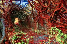red weed - Google Search