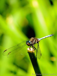 Dragon Fly New Hobbies, Have Fun, Dragon, Pictures, Photography, Animals, Photos, Photograph, Animales