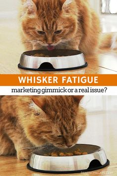 Whisker fatigue is not just another marketing gimmick -- for some cats it's a real problem that causes discomfort when eating and drinking | Whisker Fatigue - Is There Really Such a Thing?