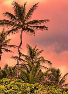 Turtle Bay, North Shore, Oahu, Hawaii, United States