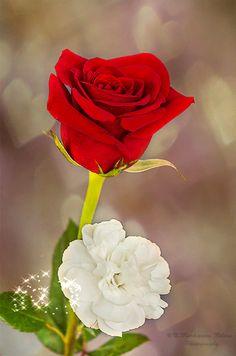 Pocas cosas existen en la vida, tan valiosas como un buen amigo,no me hace…