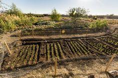 Jeff-Smith_Heritage-Foods-Mission-Garden_Edible-Baja-Arizona_02.jpg (1280×853)