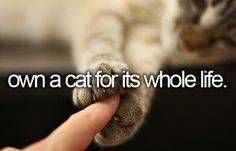 #own a cat for its whole life