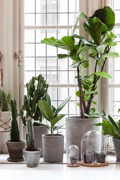 plantes de maison