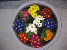 I fiori di Franco