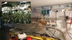 Desmantelan una compleja plantación de marihuana en Ibiza que contaba con hilo musical para las plantas