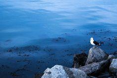 #Regram post to @pinterest #nikon #d3300 #nikond3300 #nikon_photography_  #photography #photogram #sea #mar #talcahuano #seagull #snapshot #beautiful #instaconce #instachile #instagood #art #nikon_dslr #nikonusa #nikonasia #nikoneurope #tagsforlikes #nikontop #pictures #photodaily #rocks #picoftheday #photogram #flickr #all_shots by herconman - #ViralInNature is named by Clutch.co as Canadas Top Social Media Marketing Agency http://vnat.ca/TopSocialMediaAgencyCanada2016 Visit us at…