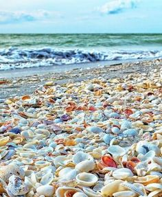 Sea Shell Covered Beach Blind P Sanibel Island Florida Usa Here Is Your Chance To Win A Free International Roundtrip Ticket Anywhere