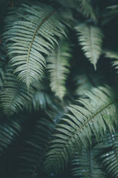 banshy:  Ferns Are My Favorite // Dylan Furst