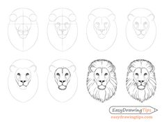 How to Draw Lion Face amp; Head Step by Step - EasyDrawingTips - How to Draw Lion Face amp; Head Step by Step - EasyDrawingTips Lion Head Drawing, Lion Drawing Simple, Tiger Drawing, Easy Drawing Steps, Simple Lion Tattoo, Drawing Hands, Drawing Drawing, Easy Animal Drawings, Animal Sketches