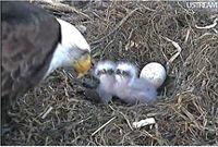 the Decorah Eagles!