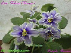 Sora Kalissa (Werness )