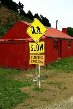 Penguin Crossing - I want to go wherever this is