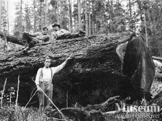 """Hyacinthe Bay, Quadra Island """"Loggers pose with a big fir. Logging Equipment, Online Gallery, Old Photos, Blood, Trees, Museum, River, Island, History"""