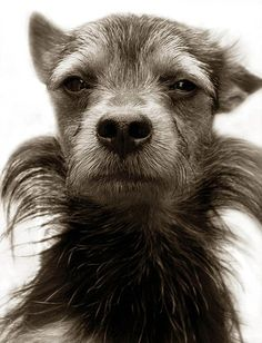 The striking collection of images contains pictures of fifty dogs of all breeds and ages...