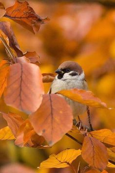 Autumn sparrow // Inspiration by (autumn leaves) Autumn Day, Autumn Leaves, Pics Art, Fall Season, Photos, Pictures, Belle Photo, Beautiful Birds, Birdhouse