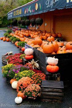 Fall in Fenville, Michigan