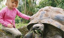 Melbourne Zoo Experiences Lemur(3.15), Meer-kat(1.15), Seal(w'end only 11.30) - Liam Tortoise(10.30 fri-sat-sun) - Elexis  With a paying adult. $30 each
