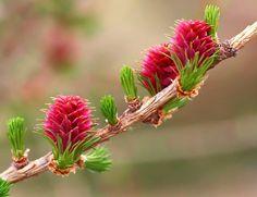El proceso terapéutico de las flores bach
