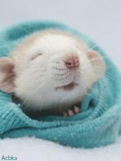 Прикольная мышка