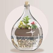 Créer un jardin en bouteille - écosysteme